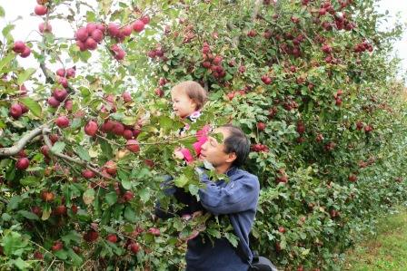 ApplePicking2013.3