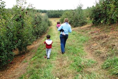 ApplePicking2013.4