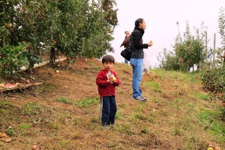 Eating Apples off the Tree