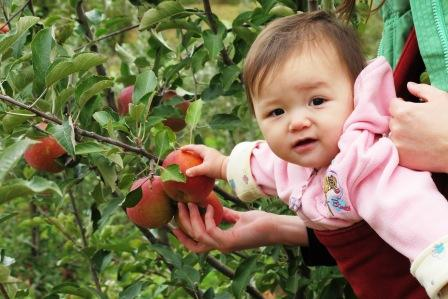 E picking apples