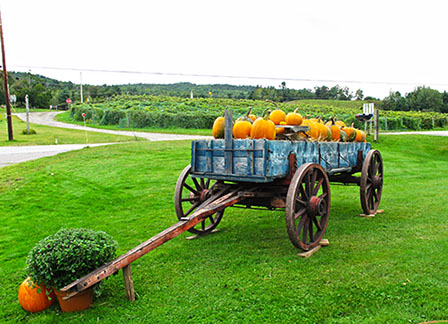 Pumpkins and fall at boyden winery